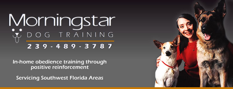 Morningstar Dog Training